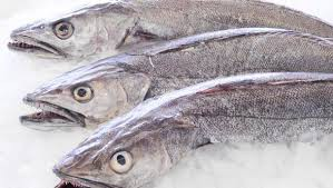 verse vis voor uw huisdier